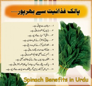 spinach-benefits-in-urdu